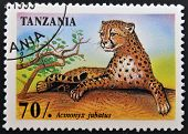 stamp printed in Tanzania shows an African animal - Leopard with the inscription