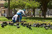 Gardeners in Lima, Peru