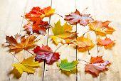 autumn maple leaves on wood background