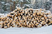 Timber On The Snow In Winter Forest