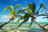Beautiful Palms On Tropical Beach