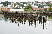 Lichen Covered Posts In Portland Harbor