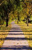 Urban Pathway