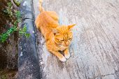 Orange Cat Crouching On The Pavement.