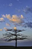 Golf Sunrise Tree