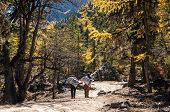 picture of porter  - Daocheng Sichuan China  - JPG