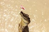 Crocodile Jumping