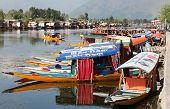 Shikara Boats On Dal Lake With Houseboats