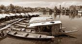 Shikara Boats On Dal Lake With Houseboats
