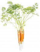 Vitamin Injection (carrots)