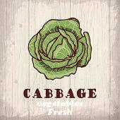 Fresh vegetables sketch background. Vintage hand drawing illustration of a cabbage