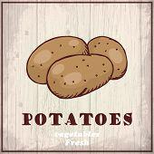 Fresh vegetables sketch background. Vintage hand drawing illustration of a potatoes