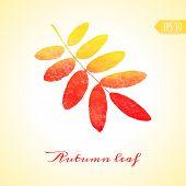Autumn rowan leaf. Vector isolated element.