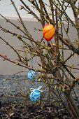 Easter Bush