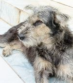 Image Of Thai's Stray Dog