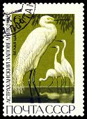 Vintage  Postage Stamp. Great White Egrets.