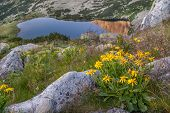 Flowers At High Altitude With View Of Glacier Lake