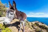 Donkey With Lake Titicaca In Background