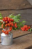 Rowan berries in a can