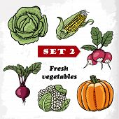 Set 2 Fresh Vegetables Cabbage, Corn, Radish, Pumpkin, Cauliflower And Beets. Vector Illustration