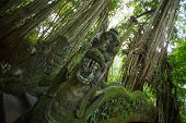 image of monkeys  - Dragon Bridge in Monkey Forest Sanctuary in Ubud - JPG