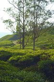 stock photo of cameron highland  - Tea plantation taken in Cameron Highlands Malaysia - JPG