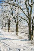 Village Street On A Winter Day