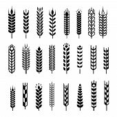 Wheat ear icon set, graphic design elements, black isolated on white background, vector illustration
