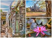 Ancient tree roots and lotus flower, Angkor, collage