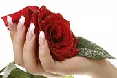 Woman's hand and rose.