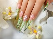 picture of nail-design  - Female hand with manicure  and beautiful floral design on  nails - JPG