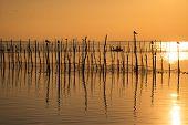 Sunset On Albufera Lagoon