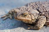 Look Of Ugly Toad