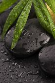 picture of pumice-stone  - Green leaf on spa stone on wet black surface - JPG