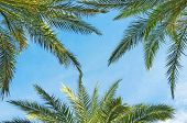 Background with palm tree