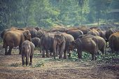 Herd of elephants at mealtimes