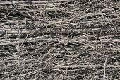 Dry twigs.