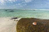 Shell On Rock, Mahe, Seychelles