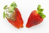 Mildew And Fresh Strawberries