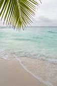 Beach And Palm Leaf, La Digue, Seychelles