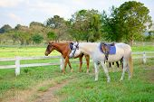 stock photo of stable horse  - 2 horses are in the stable waiting for getting out for free running - JPG