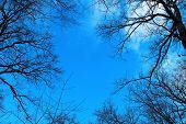 image of unique landscape  - Black trees against the blue sky - JPG