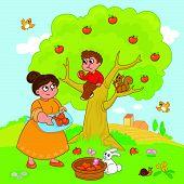 Big apple tree