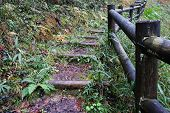Wooden Trunk Steps In Autumn Forest
