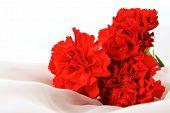 Red Cloves
