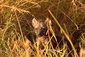 Baby Hyenas, Masai Mara
