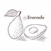 Engraving Style Avocado With Leaf And Slice