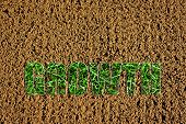Newly Prepared Soil With Images Of New Grass In The Word Growth