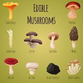 picture of edible mushroom  - Edible mushroom 10 items set - JPG