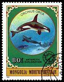 Vintage  Postage Stamp.  Grampus.